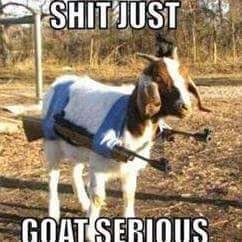 Shit Goat serious